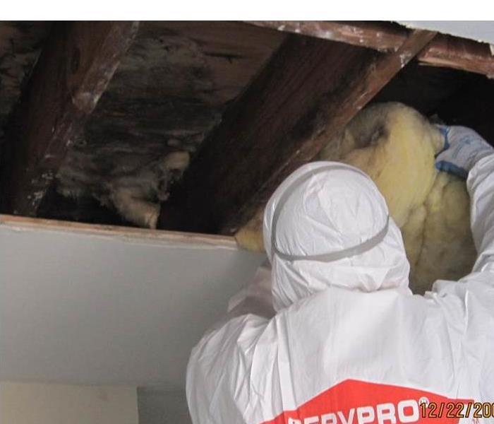 Mold Remediation For Immediate Service, Call SERVPRO in Gibbsboro, NJ 856-566-3388